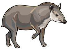 Niżowy tapir ilustracji