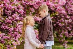 Ni?os en flor de cerezo rosada del amor El amor est? en el aire Junte a los ni?os preciosos adorables caminan el jard?n de Sakura foto de archivo
