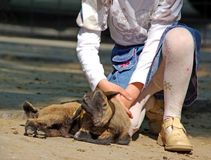 Niña con el cabrito de la cabra Imagen de archivo libre de regalías