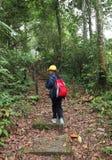 Niña en alza del senderismo de la naturaleza en bosque Imagen de archivo libre de regalías