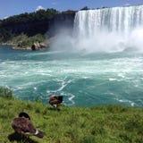 Niagara Falls gäss Fotografering för Bildbyråer