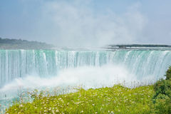 Niagara Falls. Powerful jet turquoise waters of the Canadian part of Niagara Falls, splashing a cloud of falling water and meadow with daisies Stock Image