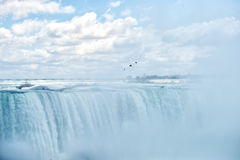 Niagara Falls - Sea gull soaring in heavy mist Royalty Free Stock Image