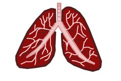 Lungs. This is a medical digital art illustration. The illustration shows the human lungs. The background is isolated Stock Image