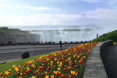 Niagara Falls Tulips. Tulip bed at Niagara Falls in May. Niagara Falls, Ontario, Canada Royalty Free Stock Photos