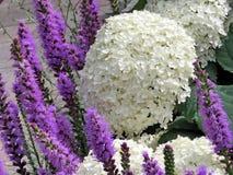 Niagara Liatris και λουλούδια 2016 Lobelia Στοκ Εικόνες
