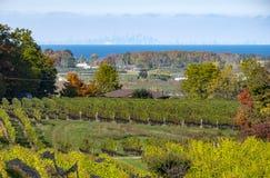 Free Niagara Region Vineyard Landscape 2 Stock Images - 161727494