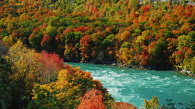 Niagara River flödar längs den höga steniga kusten täckte dagen för nedgången för höstskogen sceniska Den populära turist- destin arkivfilmer