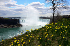 The Niagara River and horseshoe falls and wild flower Stock Photography