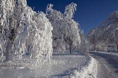 Niagara spadki Oszraniają Lodowi drzewa zdjęcia stock