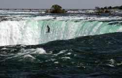 Niagra waterfall wonder. Nice Niagara falls cascade view Stock Image