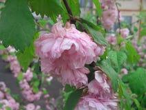 Nic flower Stock Image