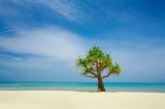 nic mangrowe zdjęcie stock