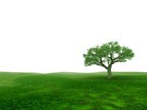 Única árvore Foto de Stock
