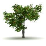 Única árvore de abricó Fotos de Stock Royalty Free