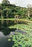 Nicaragua natur Royaltyfri Fotografi