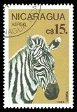 Nicaragua sebra royaltyfri foto