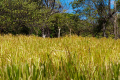 Nicaraguan field Stock Image