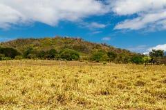Nicaraguan field Stock Images