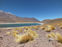 Nicas de ¡ de Lagunas Altiplà Photos libres de droits