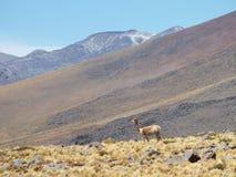 Nicas del ¡de Lagunas Altiplà Imagenes de archivo