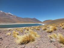 Nicas del ¡de Lagunas Altiplà Fotos de archivo libres de regalías
