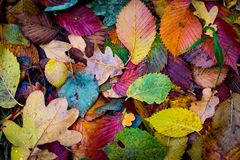 Autum leafage background. Nice abstract background with autumn leafage in forest Royalty Free Stock Photo