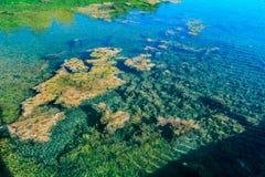 Nice abstrakt begreppsikt av härlig naturlig klar bakgrund för havvattendamm i tropisk trädgård med havsväxter som svävar på wat Arkivbild