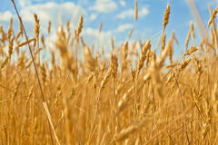 Nice agriculture Royalty Free Stock Image