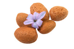 Nice almond nut Stock Image