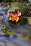 Autumn leaf on wet stone. Nice alone autumn leaf on wet stone Stock Photo