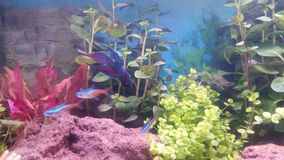 Nice aquarium. My aquarium in house Stock Image