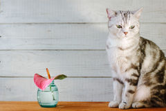 Nice aroma concept - cat sitting behind the nice scent flower. Stock Image