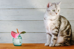 Nice aroma concept - cat sitting behind the nice scent flower. Royalty Free Stock Images