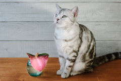 Nice aroma concept - cat sitting behind the nice scent flower. Royalty Free Stock Photo