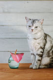 Nice aroma concept - cat sitting behind the nice scent flower. Royalty Free Stock Image