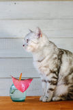 Nice aroma concept - cat sitting behind the nice scent flower. Royalty Free Stock Photography