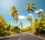 Nice asfalt road with palm trees Stock Image
