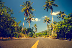 Nice asfalt road with palm trees Royalty Free Stock Images