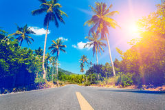 Nice asfalt road with palm trees Royalty Free Stock Image