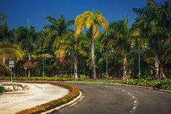 Nice asfalt road with palm trees against the blue sky Royalty Free Stock Photo