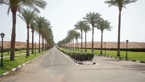 Nice asphalt road lined with palm trees on the sides in Egypt.  stock footage