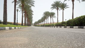 Nice asphalt road lined with palm trees on the sides in Egypt.  stock video