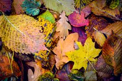 Nice autumn cover with leafage. Abstract background Stock Photos