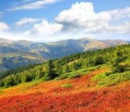 Autumn day in Carpathians Stock Image
