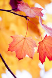 Nice autumn foliage Stock Photos