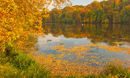 Nice autumn landscape with lake Stock Photography