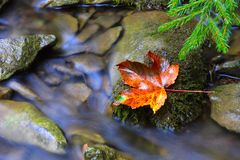 Nice autumn leaf on wet stone Royalty Free Stock Photography
