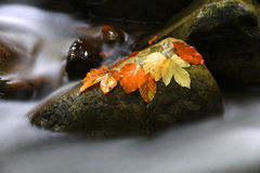 Nice autumn leafage on wet stone Stock Photography