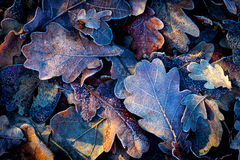 Nice autumn leafs with frost. Abstract background Royalty Free Stock Image